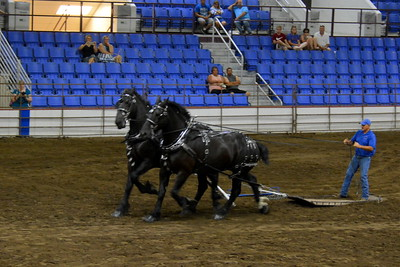 Draft horse team - 2017 ND State Fair - 7-22-17
