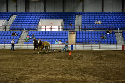 Draft horse teams - 2017 ND State Fair - 7-22-17