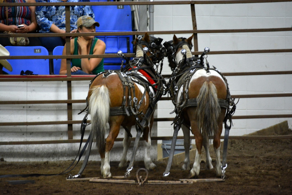 2017 ND State Fair - Pony pull contest - 7-22-17
