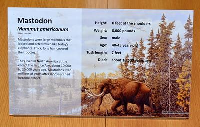 Mastodon @ ND Heritage Center - August 1, 2017