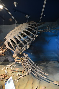 Giant turtle @ ND Heritage Center - August 1, 2017