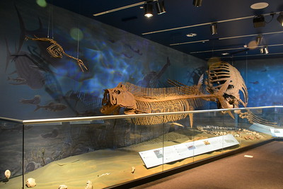 Flying dinosaur, Xiphactinus (Sword Ray) & giant turtle @ ND Heritage Center - August 1, 2017