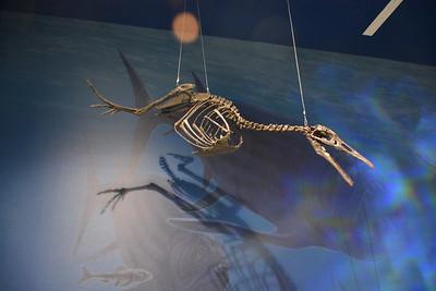 Flying dinosaur @ ND Heritage Center - August 1, 2017