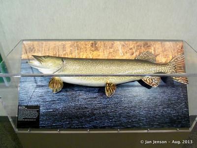 ND state fish - northern pike
