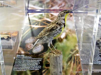 Meadowlark - ND State Bird
