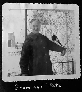 Grandma Helen Clark Robinson with Pete, the pet magpie on the ranch in 1950s