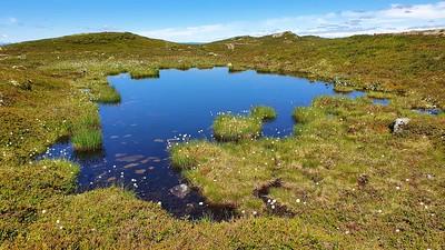 FÃ¥berg Vestfjell  24/07/2020    --- Foto: Jonny Isaksen