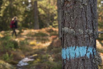 Vardalsåsen   06/10/2016   -   Foto: Jonny Isaksen