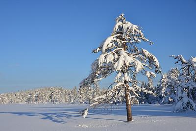 Fjortentjernsmyrene, Gjøvik 03/02/2018   --- Foto: Jonny Isaksen