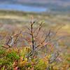 Skjervungfjellet  16/09/2012   --- Foto: Jonny Isaksen