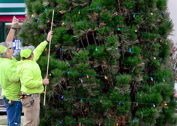 KEVIN HARVISON | Staff photo<br /> McAlester city employees put strings of Christmas Lights on trees and bushes in the median on Carl Albert Parkway.