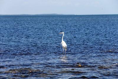 Heron near the marina