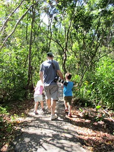On the Gumbo Limbo Trail