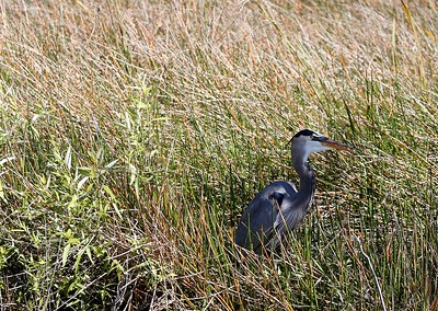 Bird at rest (photo by Dave)