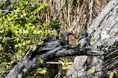 Bird perching (photo by Dave)