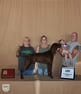 Saturday Best Male of Show - Best Male of Breed