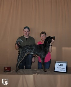 Saturday Best Male of Breed - BLU