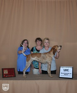 Saturday Best Female of Show - Best Female of Breed