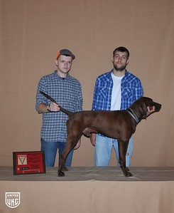 Best Male of Show - Dogs that hunted Thursday Bench Show