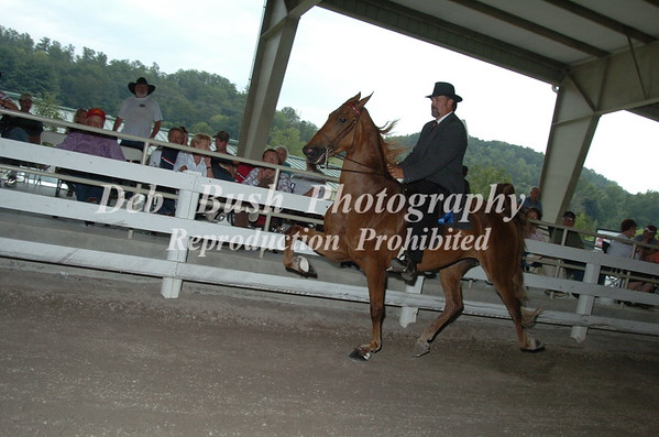 CLASS 10  SADDLEBRED OPEN