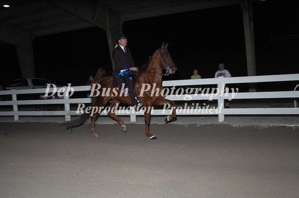 CLASS 38  ROOKIE SADDLEBRED