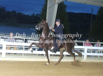 CLASS 14  SADDLEBRED OPEN