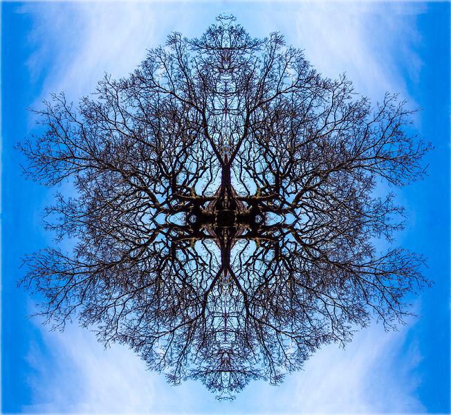 Blue Tree 46x41 Birch
