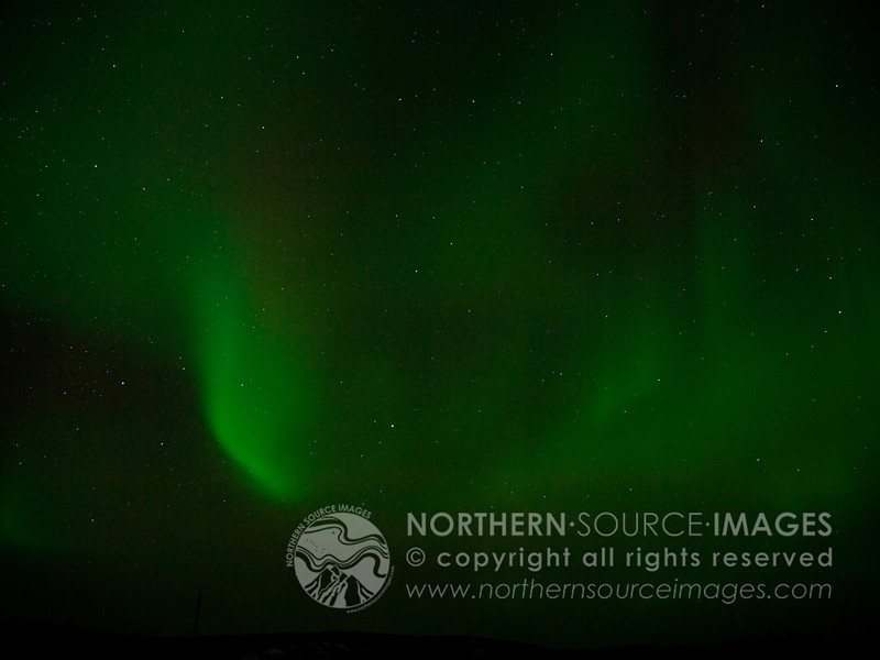 COPYRIGHT © 2011 NORTHERN HORSE PHOTOGRAPHY