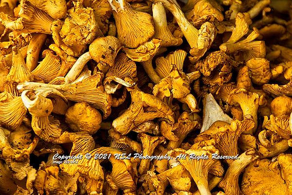 Golden Chanterelles mushrooms at the market in Montmartre, Paris on the Rue des Abbesses.
