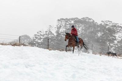 NSW 37 Snow Rider