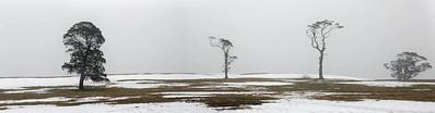 NSW 40 Four Trees