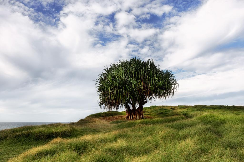LH 03 Pandanus View