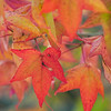 MRT 42 Autumn Leaves 2