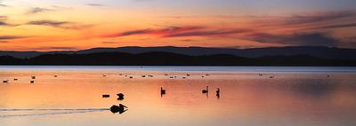 S 03 Swan Lake