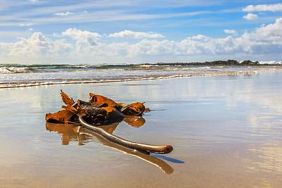 BH 02 Sunlit Seaweed