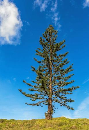 BH 01 Lone Pine