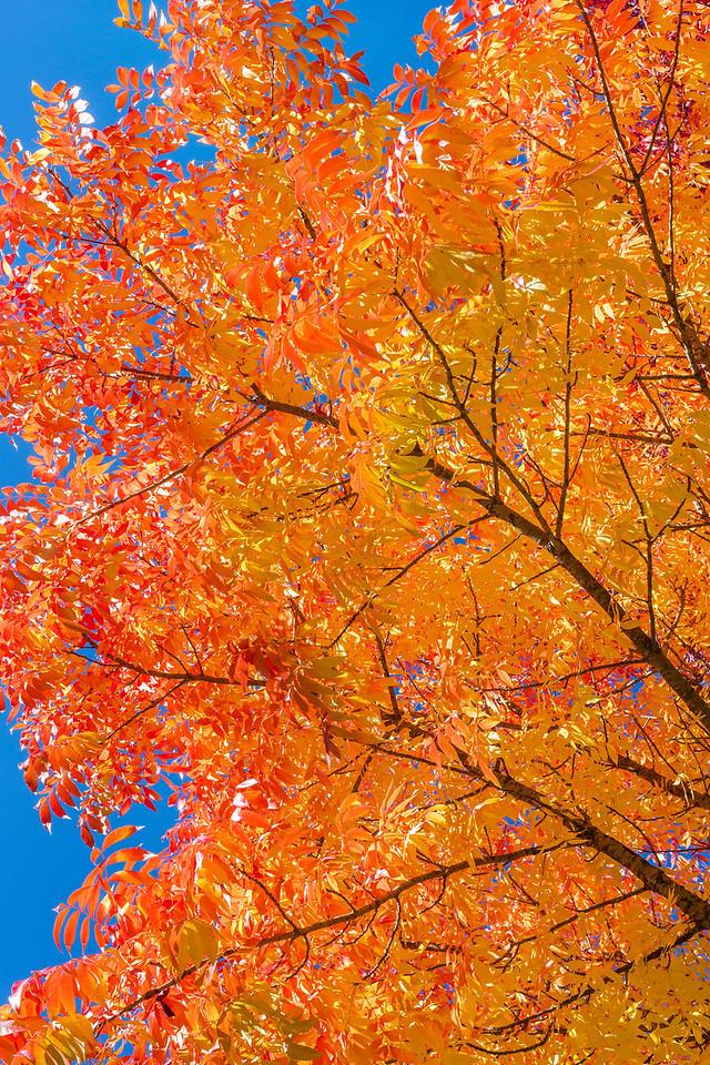 GI 01 Glorious Autumn Leaves