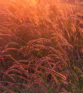 BG 04 Sunrise Grasses