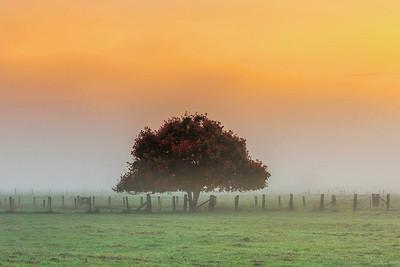 BG 02 Autumn Fog 02