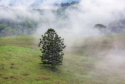 NSW 36 Tree in the Mist