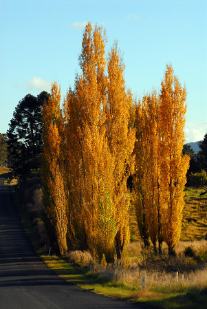 NSW 10  Autumn Colours