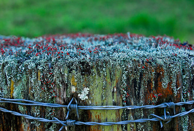 NSW 12  The fence Post