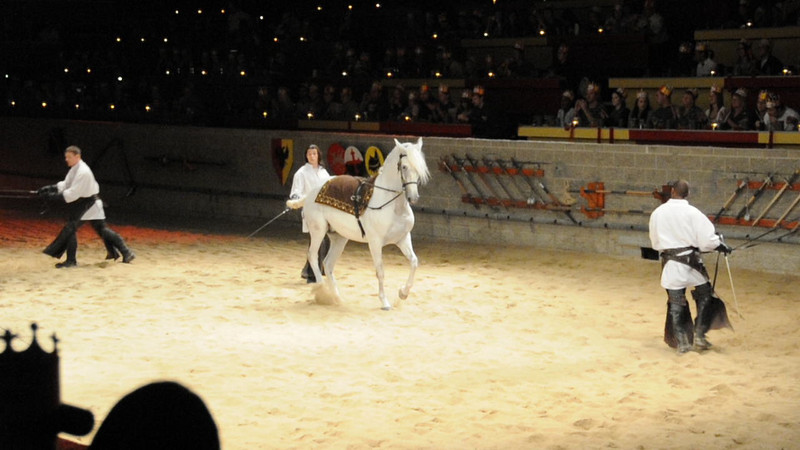 092520-1 Medieval Times - horses
