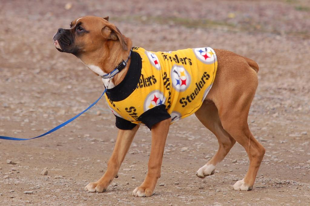 A Steelers fan.
