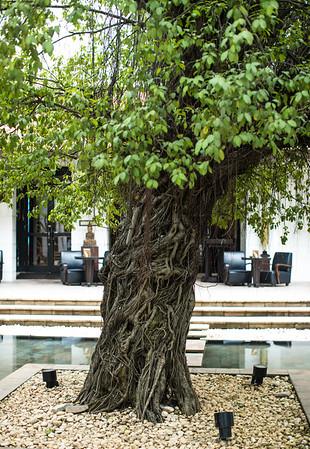 Park Hyatt, Siem Reap- Courtyard