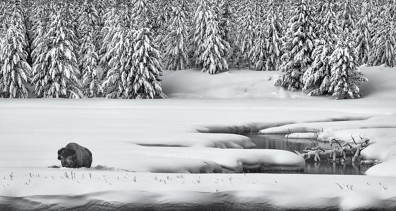 Stan Bysshe - Yellowstone Winter