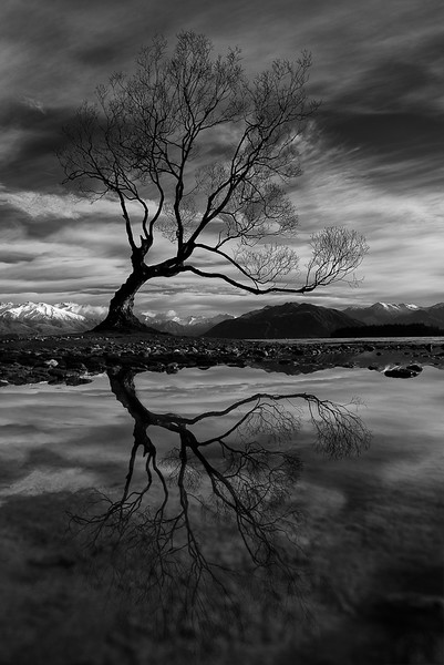 Class3M_2nd_Tom Brett_Wanaka Tree