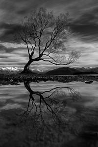 Class3M_2nd_Tom Brett_Wanaka Tree