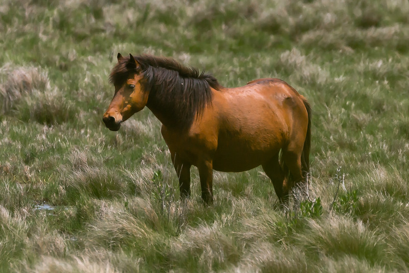 Clark Barker_1 - Pony