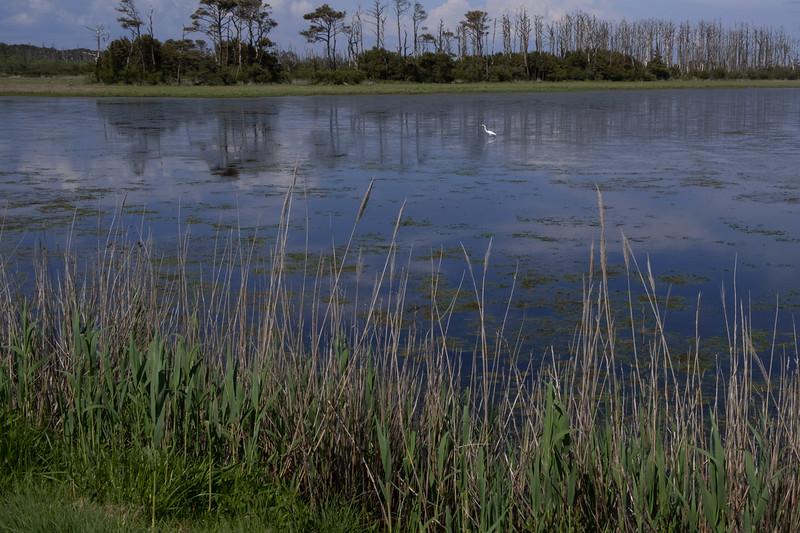 Joan Barker_3 - Marsh View